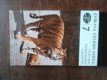 Zvířata celého světa 7: Velké kočky a gepardi